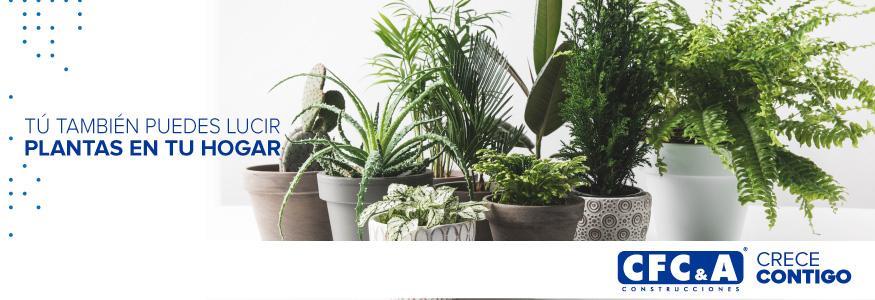 Consejos básicos para cuidar las plantas al interior de tu casa